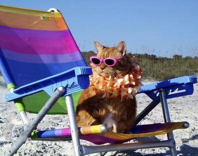 Cat in beach chair