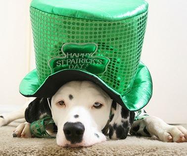 St. Pat dog