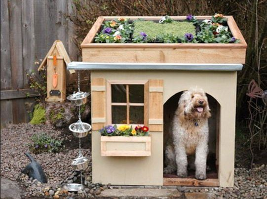 reclaimed dog house