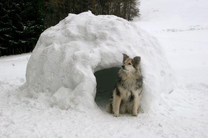 winter dog house